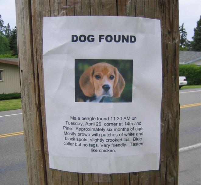 dog_found.jpg