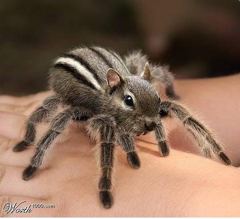w1kspidersquirrel.jpg